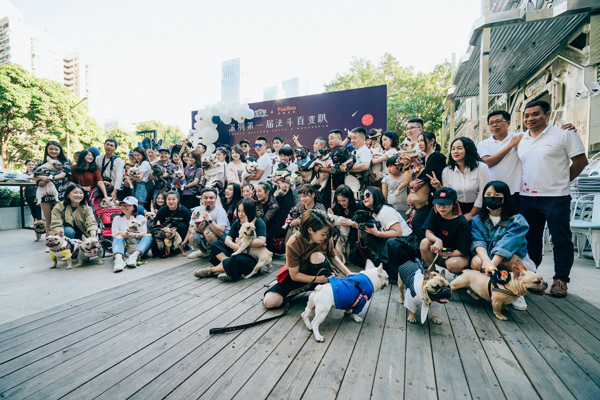 Halloween French bulldog party at Shenzhen was successfully co-held by Pawllion with local professional breeders and pet stores